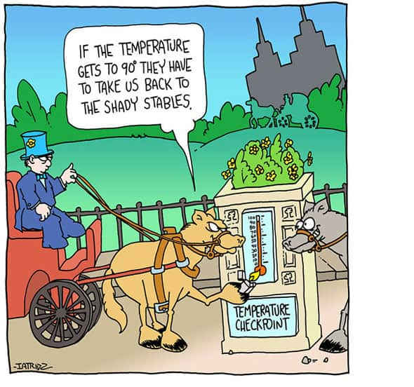 NYC carriage ride protests